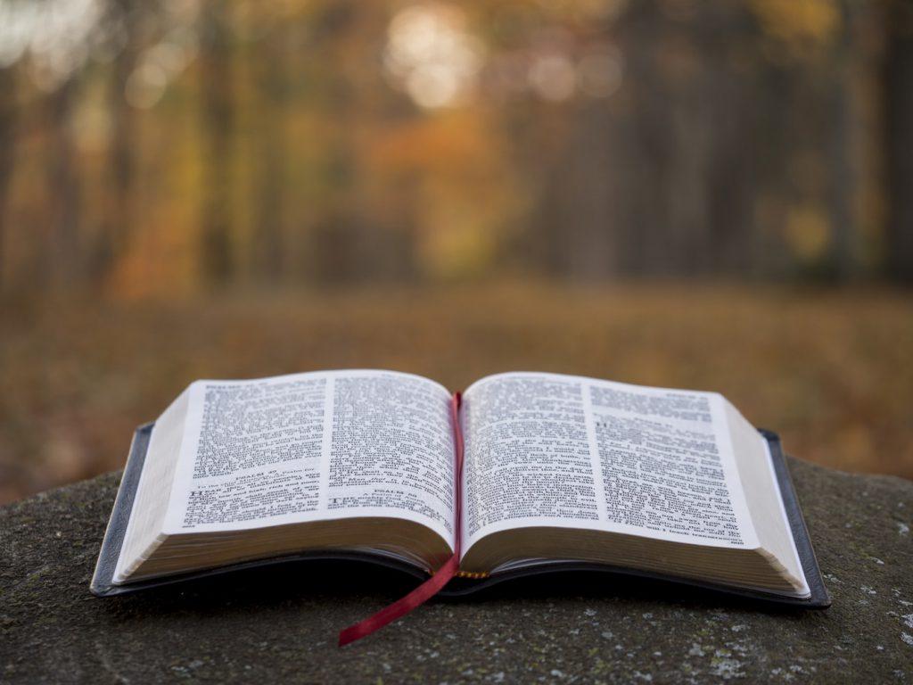 a_book_in_fall