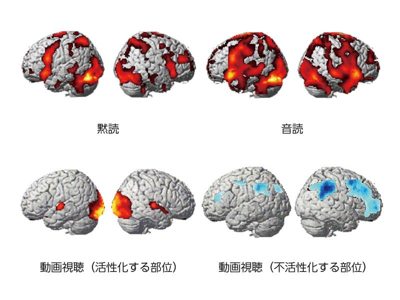 「黙読」「音読」「動画視聴」それぞれの脳の神経細胞の活性化状況